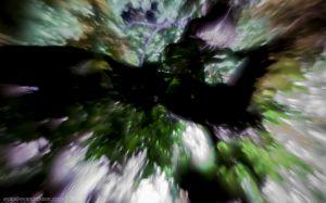 Evan Dickson - Tree at Night-0802